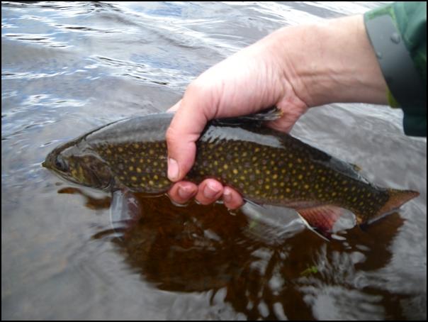 144-poisson