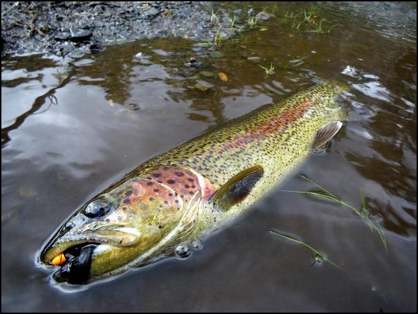 146-poisson