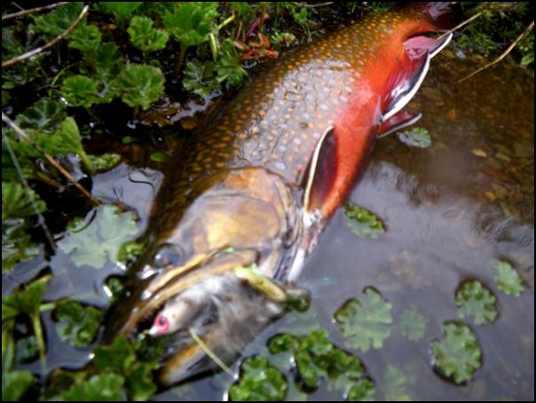165-poisson