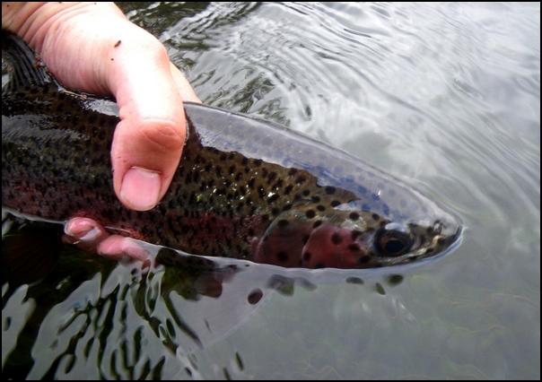 186-poisson