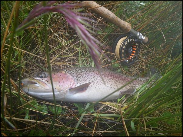 50-poisson