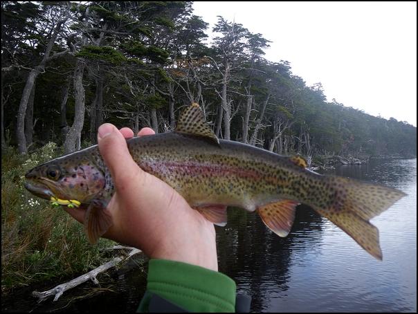124-poisson