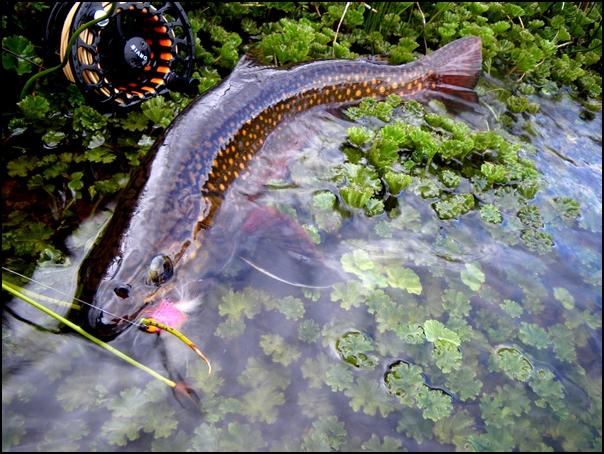 137-poisson