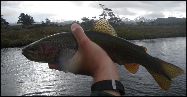 184-poisson